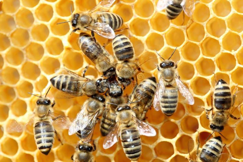 Μερικές μέλισσες χορεύουν στοκ φωτογραφία