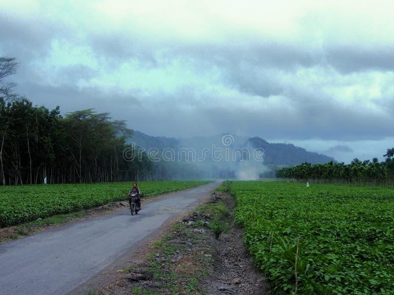 Μερικοί της Ιάβας σε μια μοτοσικλέτα που περνά από τις φυτείες στοκ εικόνες