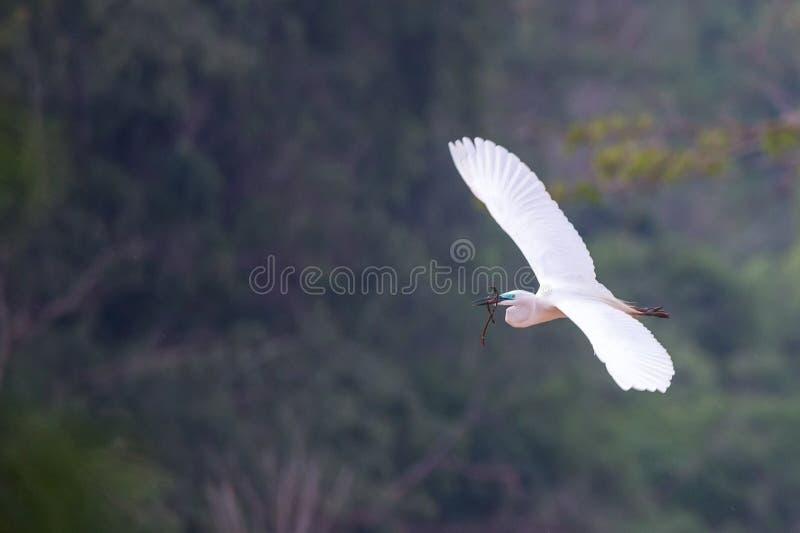 Μεσαία φτερά τσικνιάδων ευρέως ανοικτά στοκ φωτογραφία με δικαίωμα ελεύθερης χρήσης