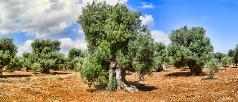 Μεσογειακός κήπος, κινηματογράφηση σε πρώτο πλάνο ο κλάδος στοκ εικόνες με δικαίωμα ελεύθερης χρήσης