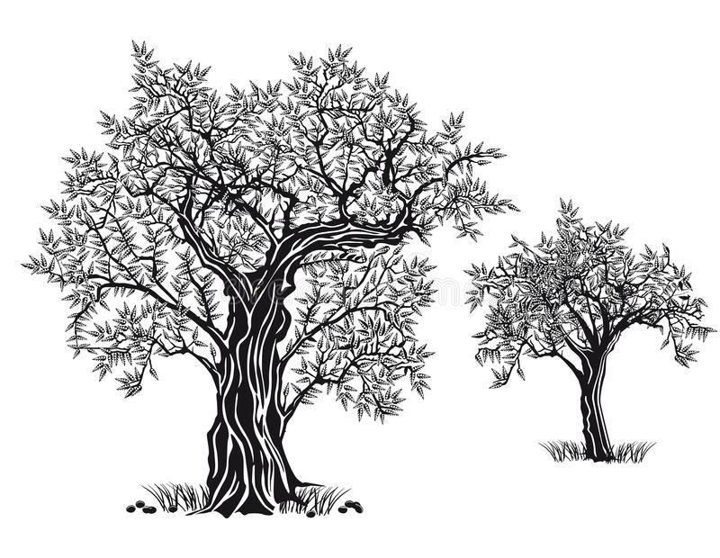 Μεσογειακός κήπος, κινηματογράφηση σε πρώτο πλάνο ο κλάδος διανυσματική απεικόνιση