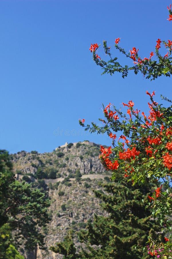 Μεσογειακό τοπίο με τα πορτοκαλιά άνθη και έναν βράχο στοκ εικόνες