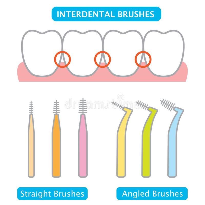 Μεσοδόντιες βούρτσα και απεικόνιση δοντιών οδοντική και προφορική έννοια προσοχής ελεύθερη απεικόνιση δικαιώματος
