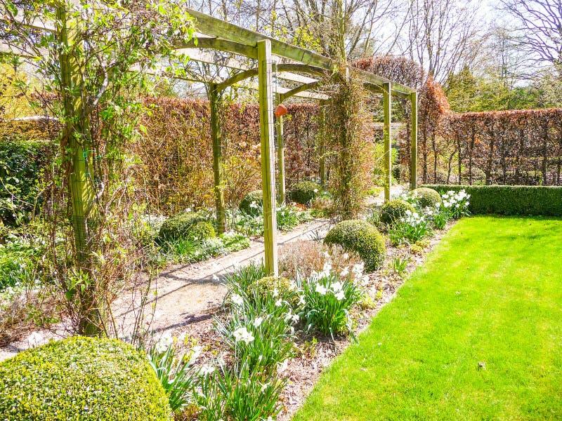 Μετάβαση περγκολών στον κήπο που περιβάλλεται από τα daffodils στο πρόωρο s στοκ φωτογραφία