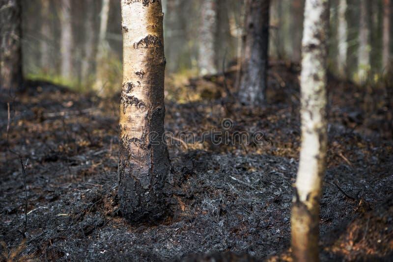 Μετά από την πυρκαγιά στοκ φωτογραφία με δικαίωμα ελεύθερης χρήσης