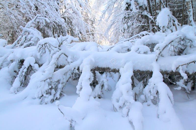 Μετά από τη θύελλα χιονιού στοκ εικόνες