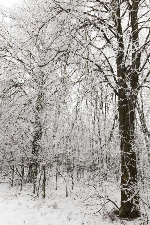 Μετά από τις χιονοπτώσεις στοκ εικόνα με δικαίωμα ελεύθερης χρήσης