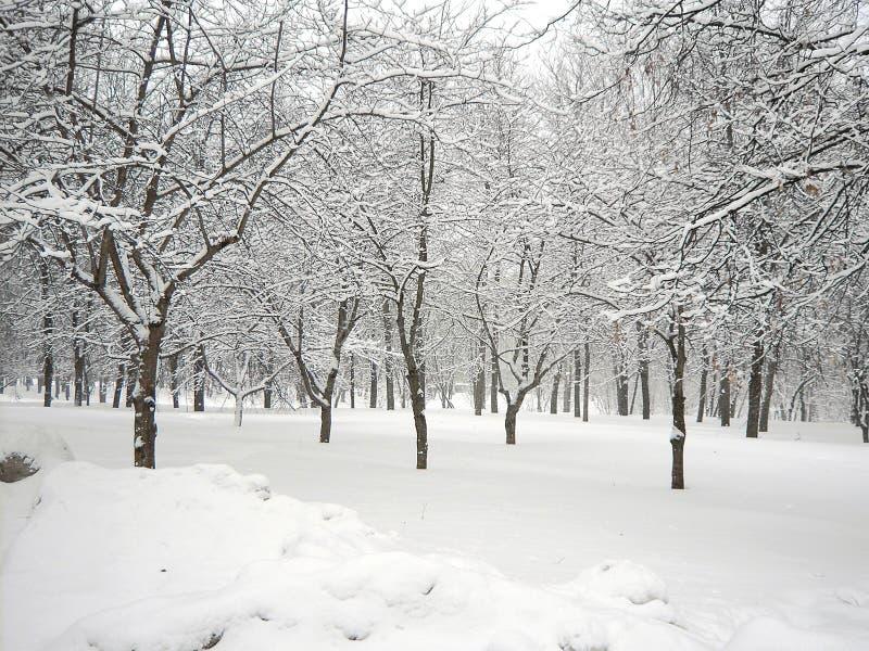 Μετά από τις χιονοπτώσεις στοκ εικόνες