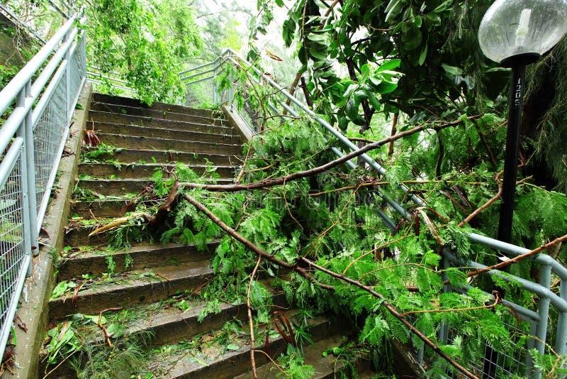 Μετά από τον τυφώνα στοκ εικόνες με δικαίωμα ελεύθερης χρήσης