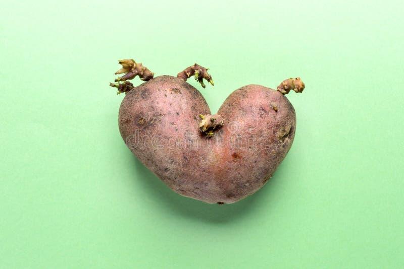 Μεταβλητός άσχημος καρδιά-που διαμορφώνεται μια πατάτα στο πράσινο υπόβαθρο στοκ φωτογραφίες