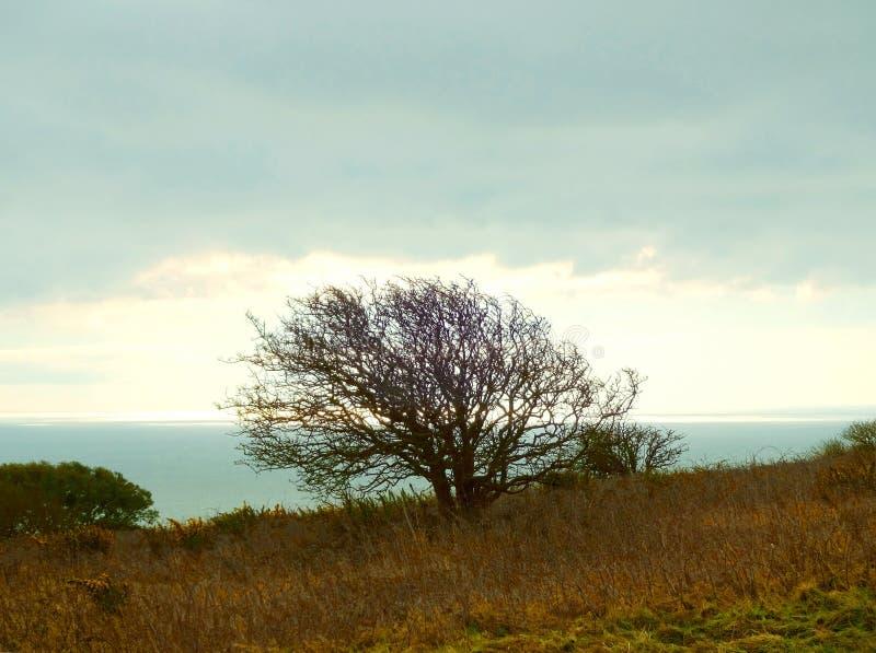 Μεταδιδόμενο μέσω του ανέμου δέντρο 2 στοκ εικόνες