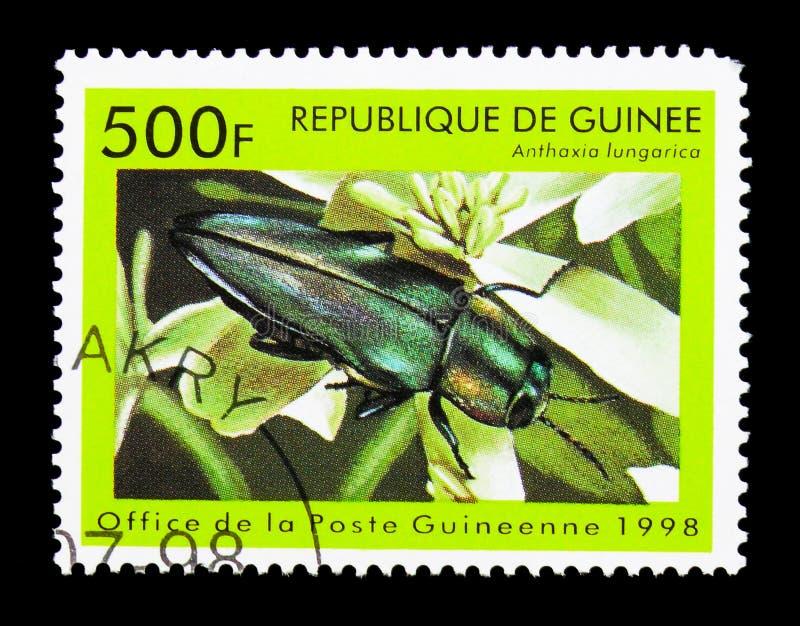 Μεταλλικός ξύλινος τρυπώντας κάνθαρος (hungarica Anthaxia), έντομα serie, στοκ εικόνες