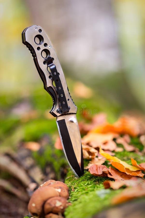 Μεταλλικό μαχαίρι για το κυνήγι που κολλιέται στο δάσος στοκ εικόνες με δικαίωμα ελεύθερης χρήσης