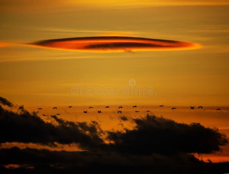 Μετανάστευση γερανών στο ηλιοβασίλεμα - λίμνη Seewinkel Burgenland Αυστρία Nationalpark Neusiedler στοκ φωτογραφίες