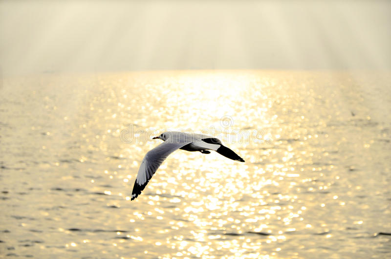 Μεταναστεύστε seagull στο ηλιοβασίλεμα στοκ φωτογραφίες