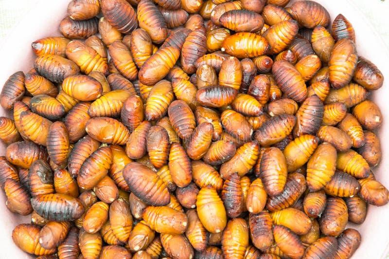 Μεταξοσκώληκας χρυσαλίδων, κουκούλι σκουληκιών μεταξιού στοκ εικόνες