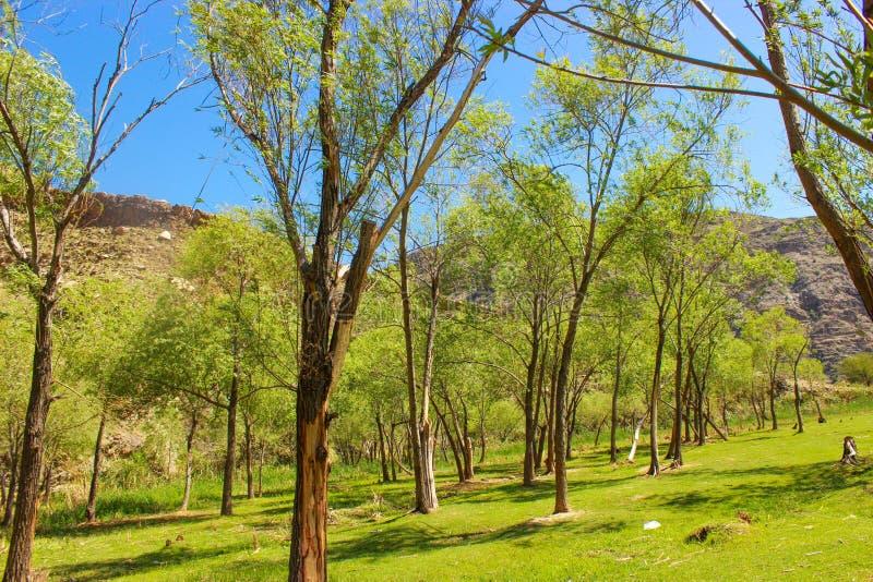 Μεταξύ των πράσινων δέντρων βουνών στοκ φωτογραφίες με δικαίωμα ελεύθερης χρήσης