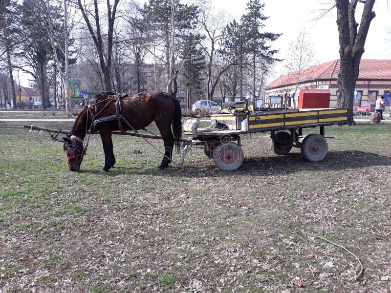 Μεταφορά τσιγγάνων στο πάρκο στοκ φωτογραφία με δικαίωμα ελεύθερης χρήσης