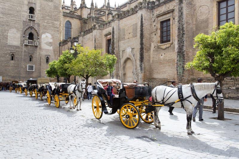 Μεταφορές των αλόγων στάσιμων μπροστά από τον καθεδρικό ναό της Σεβίλης στοκ εικόνες