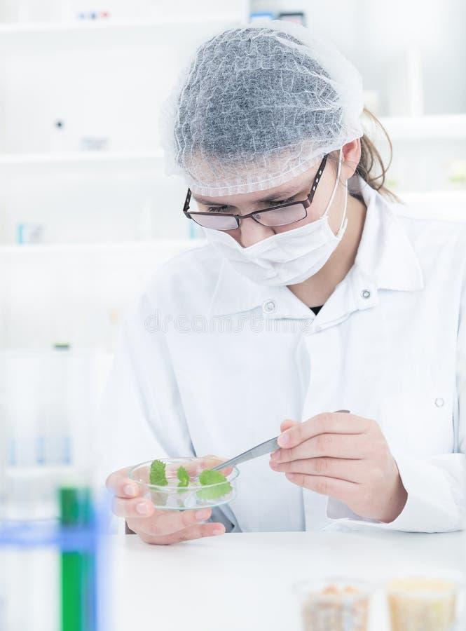 Μελέτη των γενετικών τροποποιημένων εγκαταστάσεων ΓΤΟ στοκ εικόνες