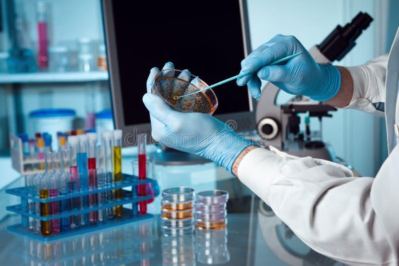 Μελέτη petri του πιάτου στοκ φωτογραφία με δικαίωμα ελεύθερης χρήσης