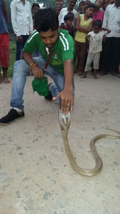 Με γυαλιά cobra στοκ φωτογραφία