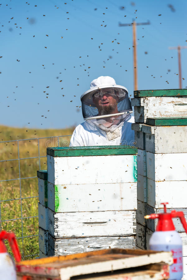 Μελισσοκόμος και μέλισσες στοκ φωτογραφία με δικαίωμα ελεύθερης χρήσης