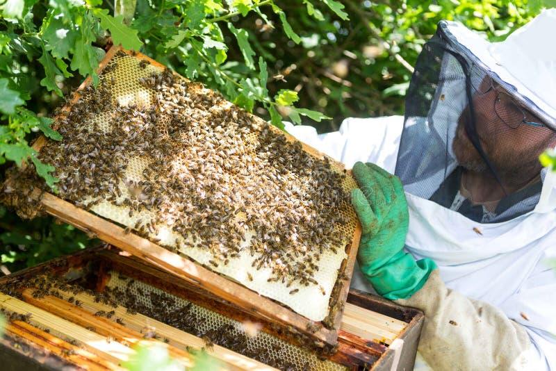 Μελισσοκόμος που εργάζεται στις κυψέλες του στον κήπο στοκ φωτογραφία με δικαίωμα ελεύθερης χρήσης