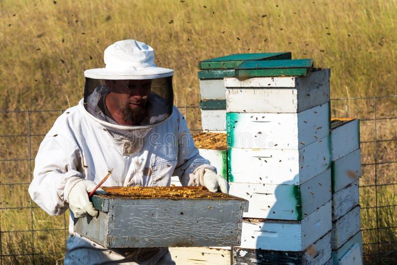 Μελισσοκόμος που φέρνει μια κυψέλη στοκ εικόνες