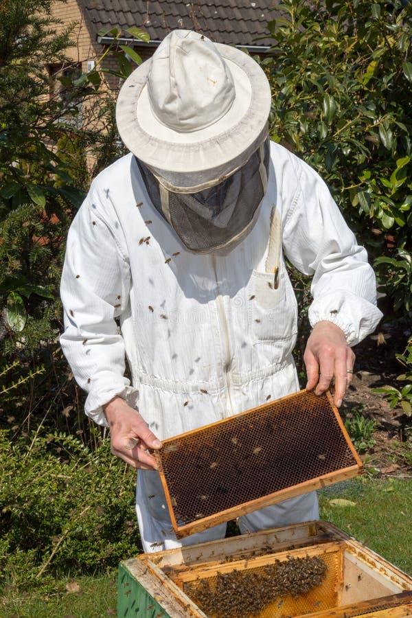 Μελισσοκόμος που φροντίζει για την αποικία μελισσών στοκ εικόνες
