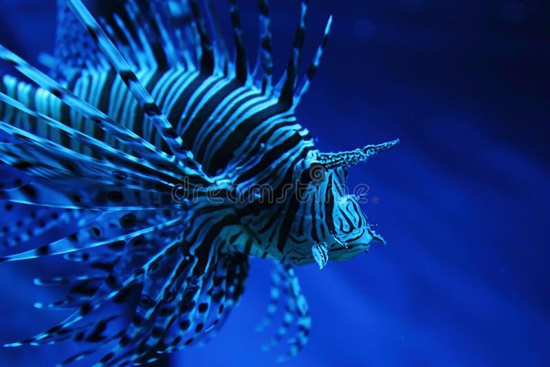 με ραβδώσεις ψαριών στοκ εικόνα