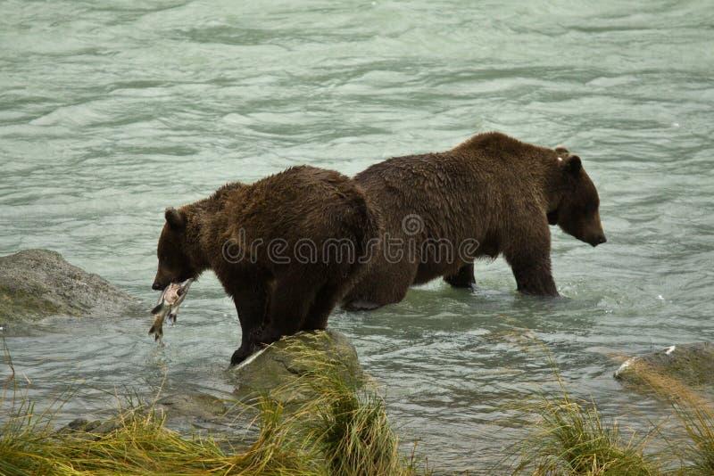 Μητέρα και juvenille από την Αλάσκα καφετιές αρκούδες στον ποταμό, ένας με το φρέσκο πιασμένο σολομό στοκ φωτογραφία με δικαίωμα ελεύθερης χρήσης