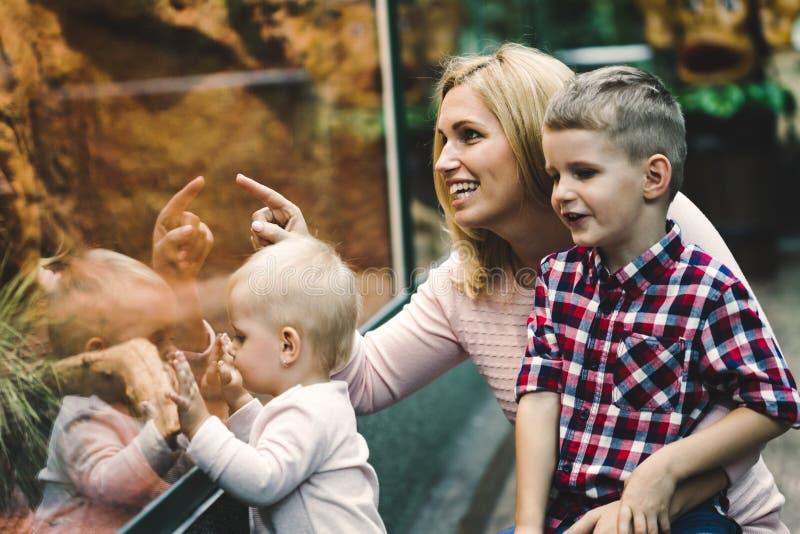 Μητέρα με τους γιους της που εξετάζουν τη χελώνα στο ζωολογικό κήπο στοκ εικόνα
