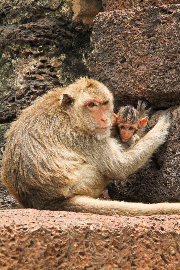 Μητέρα πιθήκων στοκ εικόνα με δικαίωμα ελεύθερης χρήσης