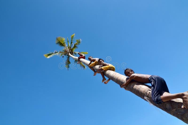 Μη αναγνωρισμένα παιδιά της φυλής Bajau τσιγγάνων θάλασσας που αναρριχείται στο δέντρο καρύδων στοκ φωτογραφία