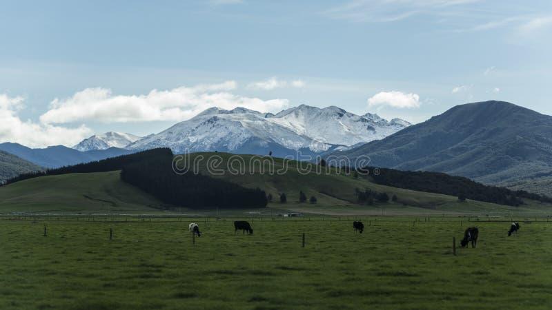 Μη αστικό λιβάδι ενάντια στο βουνό χιονιού στη Νέα Ζηλανδία στοκ εικόνες με δικαίωμα ελεύθερης χρήσης