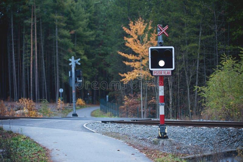 Μη προστατευμέή ράγα που διασχίζει στο δάσος στοκ εικόνες