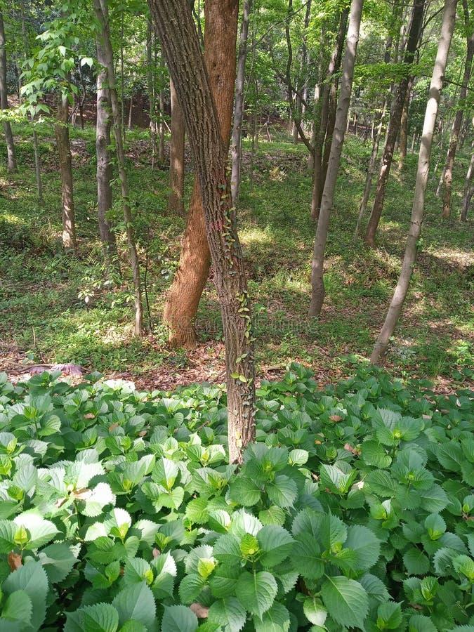 Μια άμπελος που αναρριχείται σε ένα δέντρο στοκ φωτογραφίες