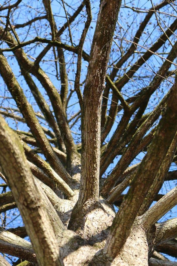 Μια άποψη επάνω στο κυπαρίσσι στοκ φωτογραφία με δικαίωμα ελεύθερης χρήσης