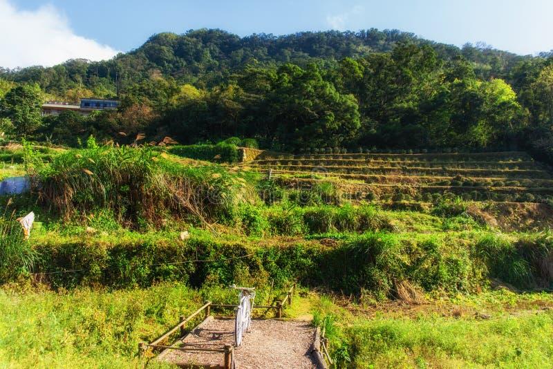 Μια άποψη μιας φυτείας τσαγιού στους λόφους Maokong στην Ταϊβάν στοκ εικόνα με δικαίωμα ελεύθερης χρήσης