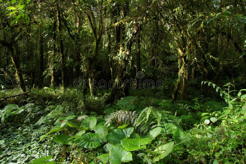 Μια άποψη της πυκνής βλάστησης τροπικών δασών με τις ηλιαχτίδες ocational στοκ εικόνα