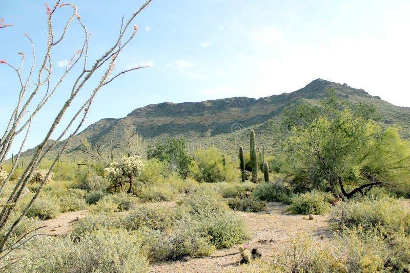 Μια άποψη του βουνού περασμάτων στην Αριζόνα στοκ εικόνες