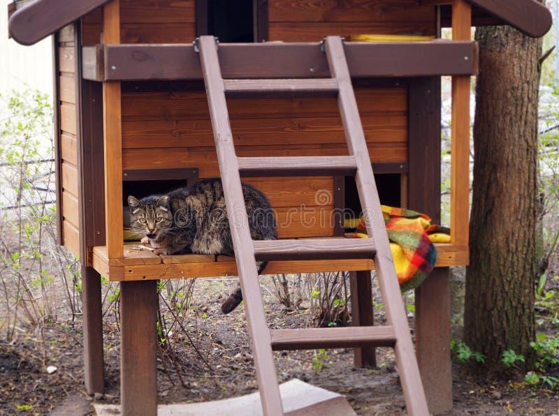 Μια άστεγη γάτα τρώει στον τροφοδότη για τα ζώα στοκ φωτογραφία