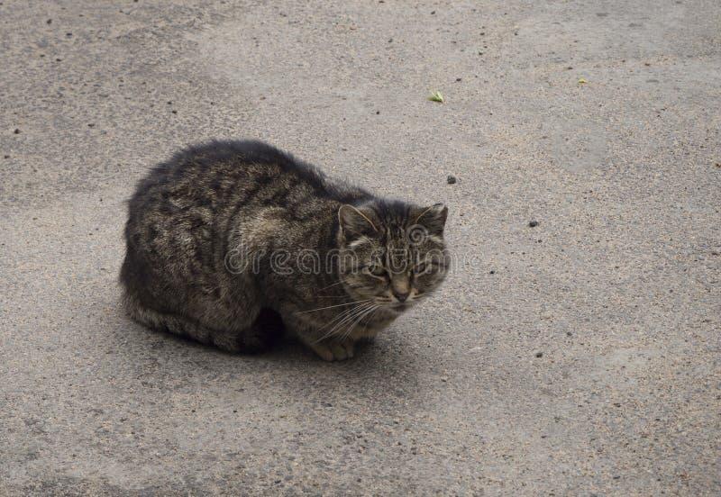 Μια άστεγη καφετιά γάτα στο κάθισμα στην οδό στοκ φωτογραφία με δικαίωμα ελεύθερης χρήσης