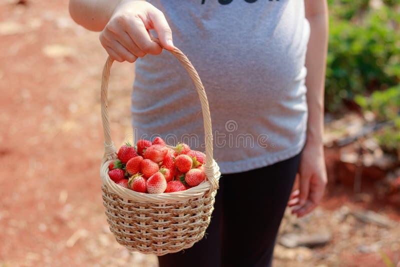 Μια έγκυος γυναίκα στέκεται ένα ξύλινο καλάθι με το φρέσκο κόκκινο s στοκ εικόνες