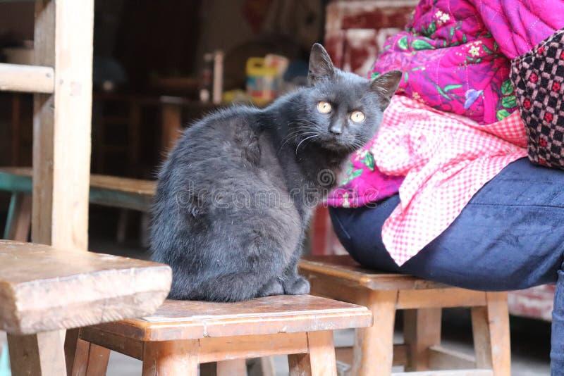 Μια έξυπνη μαύρη γάτα στοκ φωτογραφία