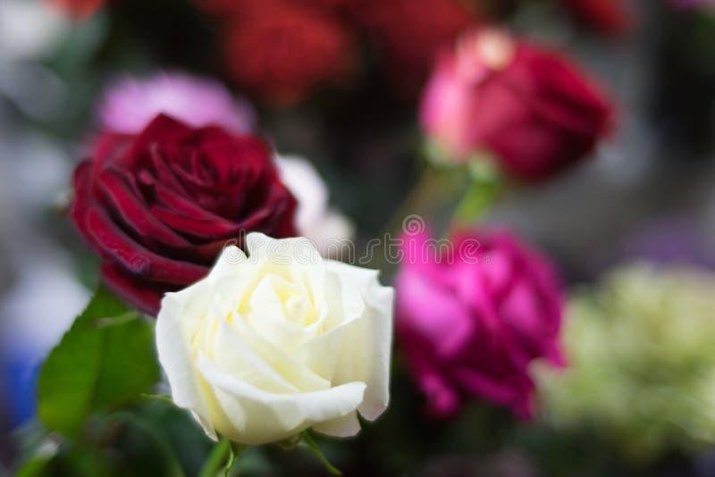 Μια ανθοδέσμη των τριαντάφυλλων στην εστίαση του φακού πορτρέτου στο ρομαντικό φως βραδιού στοκ εικόνα με δικαίωμα ελεύθερης χρήσης