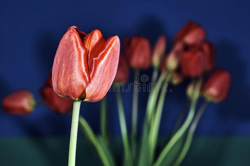Μια ανθοδέσμη των όμορφων λουλουδιών των τουλιπών στοκ φωτογραφία με δικαίωμα ελεύθερης χρήσης
