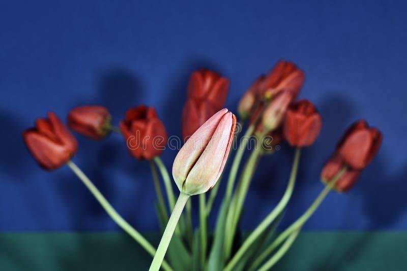 Μια ανθοδέσμη των όμορφων λουλουδιών των τουλιπών στοκ εικόνες