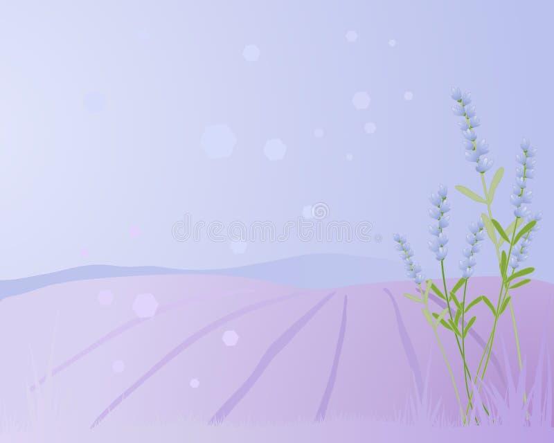 Lavender υπόβαθρο απεικόνιση αποθεμάτων